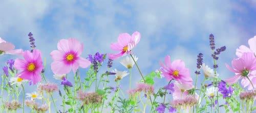 wild-flowers-flowers-plant-macro-